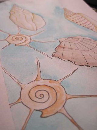 Shells1